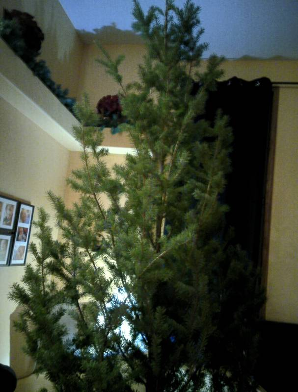 tree is in the house